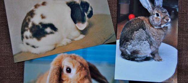 Kaniner och Forrest Gumps chokladkartong