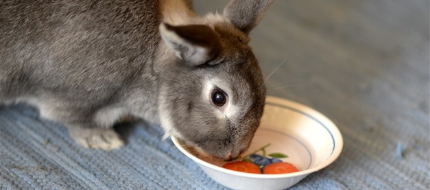 Kaninen Hanna tipsar!